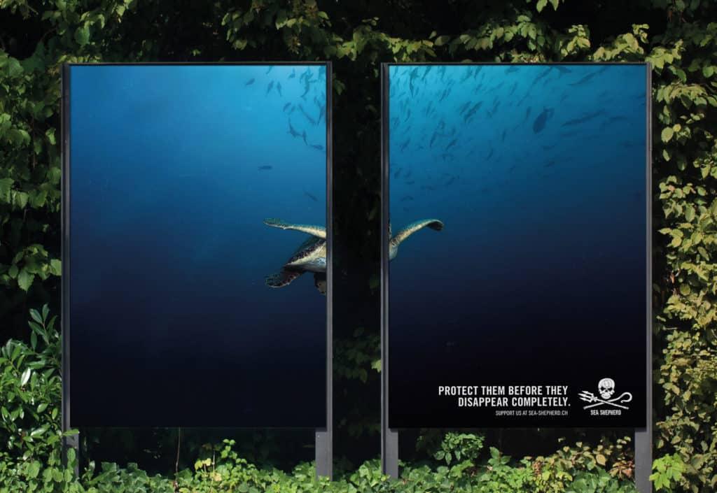 campagne affichage sea shepherd suisse